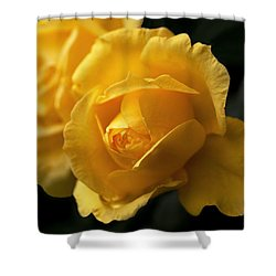 New Yellow Rose Shower Curtain by Rona Black