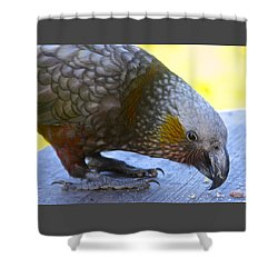 New Zealand Kaka Happy Hour Shower Curtain by Venetia Featherstone-Witty