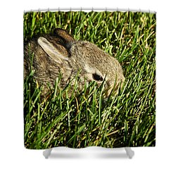 The Baby Cottontail Shower Curtain