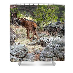 Newborn Elk Calf Shower Curtain