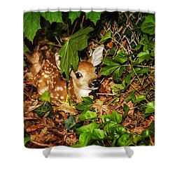 Shower Curtain featuring the photograph Newborn Fawn  by Eleanor Abramson