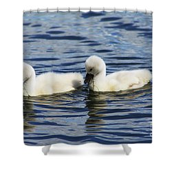 Newborn Mute Swans Shower Curtain by Alyce Taylor