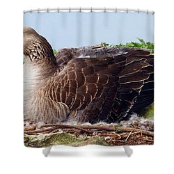 Shower Curtain featuring the photograph Newborn Peek by Elizabeth Winter