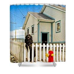 Newfoundland Dog In Newfoundland Shower Curtain