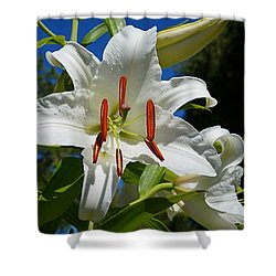 Newly Opened Lily Shower Curtain by Nick Kloepping