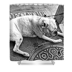 Newsworthy Dog In French Quarter Black And White Shower Curtain by Kathleen K Parker
