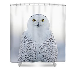 Nh Seacoast Snowy Owl  Shower Curtain by John Vose