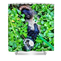 Nicky Ferret On A Garden Walk Shower Curtain