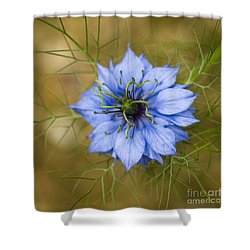 Nigella Damascena Shower Curtain by Anne Gilbert