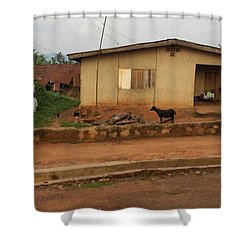 Nigerian House Shower Curtain by Amy Hosp