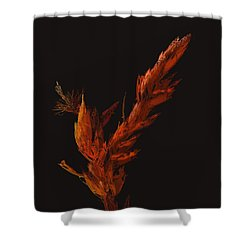 Night Bloom Shower Curtain