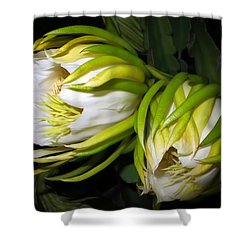 Night Blooming Cereus 31 Shower Curtain