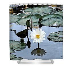 #night Blooming Water Lily Shower Curtain