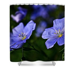 Shower Curtain featuring the photograph Night Garden by Linda Bianic