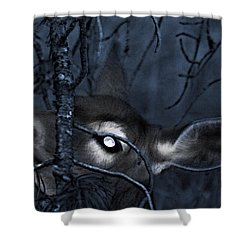 Shower Curtain featuring the photograph Night Grazing by Janie Johnson