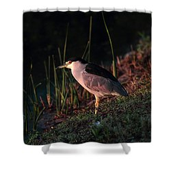 Night Heron  Shower Curtain by Duncan Selby