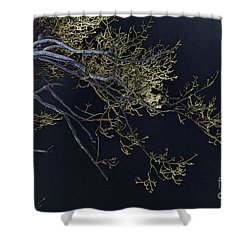 Night Shower Curtain by Lois Bryan