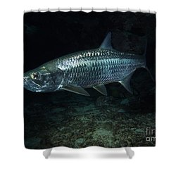 Night Tarpon Shower Curtain by Carey Chen