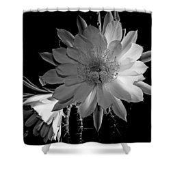 Nightblooming Cereus Cactus Flower Shower Curtain