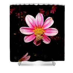 Nighttime Visitor Shower Curtain