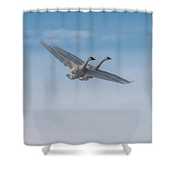 Trumpeter Swans Tandem Flight Shower Curtain
