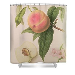 Noblesse Peach Shower Curtain