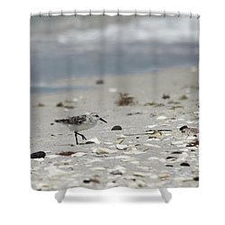 Nokomis Beach Piper Shower Curtain