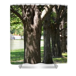 Norfolk Botanical Garden 4 Shower Curtain by Lanjee Chee
