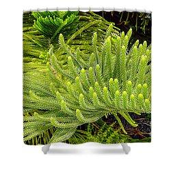 Norfolk  Island  Pine In California Shower Curtain by Bob and Nadine Johnston