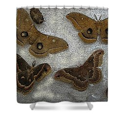 North American Large Moth Collection Shower Curtain