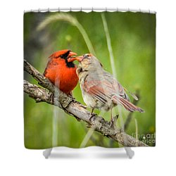 Northern Cardinal Male And Female Shower Curtain
