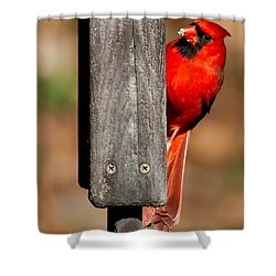 Shower Curtain featuring the photograph Northern Cardinal by Robert L Jackson