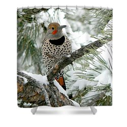 Northern Flicker On Snowy Pine Shower Curtain