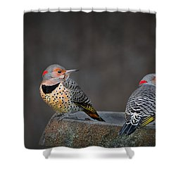 Northern Flickers Shower Curtain by Bill Wakeley