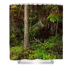 Northern Forest 1 Shower Curtain by Jenny Rainbow