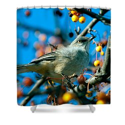 Northern Mockingbird Shower Curtain by Bob Orsillo