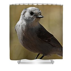 Northern Mockingbird Shower Curtain by Ernie Echols