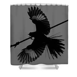 Shower Curtain featuring the photograph Northern Mockingbird by Leticia Latocki