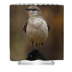 Northern Mockingbird Shower Curtain