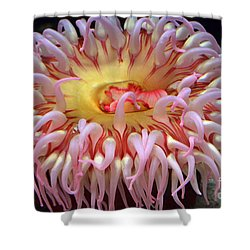 Shower Curtain featuring the photograph Northern Red Anemone by Robert Meanor