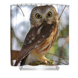 Northern Saw-whet Owl Shower Curtain