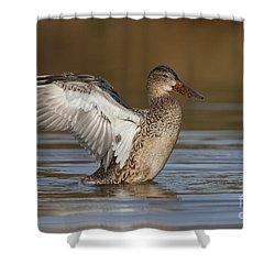 Northern Shoveler Hen Wing Flap Shower Curtain by Bryan Keil