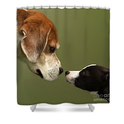 Nose To Nose Dogs 2 Shower Curtain