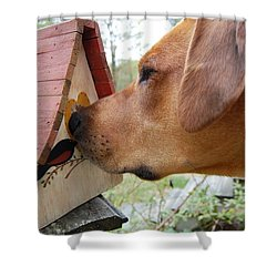 Shower Curtain featuring the photograph Nosey by Mim White