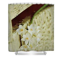 Nostalgic Paper Whites Shower Curtain by Carla Parris