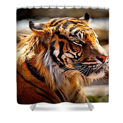 Not A Tigger Shower Curtain by Lynn Sprowl