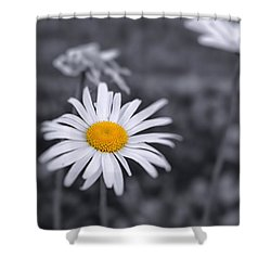 November Daisy Shower Curtain
