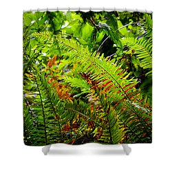 November Ferns Shower Curtain by Adria Trail