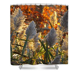 November Lights Shower Curtain by Dianne Cowen