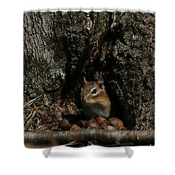 Shower Curtain featuring the photograph Nut Therapy  by Neal Eslinger
